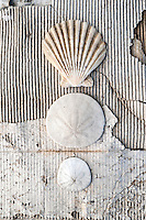 &quot;The eternal quest to recover poetry&quot;<br /> ~Elena Ray<br /> <br /> ||| Seashells On Weathered Cardboard