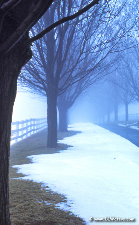 Winter country lane in the fog.