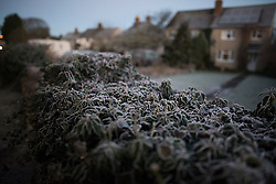 © Licensed to London News Pictures. A plant covered in frost outside a property in Buford, Oxfordshire on December 29, 2014 as most of the UK woke to freezing temperatures.. Photo credit : Ben Cawthra/LNP
