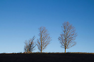 Cornwall, New York - The sun shines on three trees in a field along Otterkill Road on Jan. 1, 2015. The trail up Schunnemunk Mountain starts by the Moodna Viaduct railroad trestle, which crosses Otterkill Road.