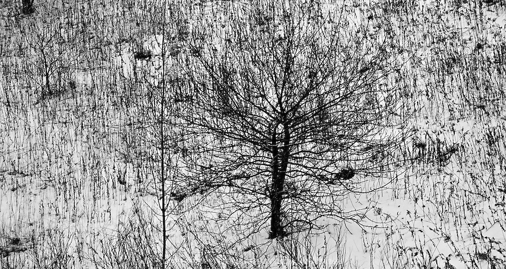 Leafless tree in a winter landscape