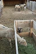 Farming in Cedar City, Utah