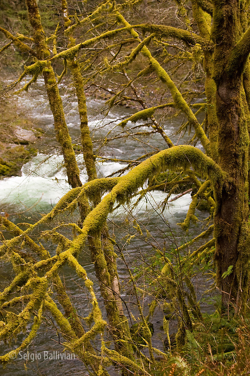 The Santiam River rapids in the Santiam River canyon of Oregon in the Spring