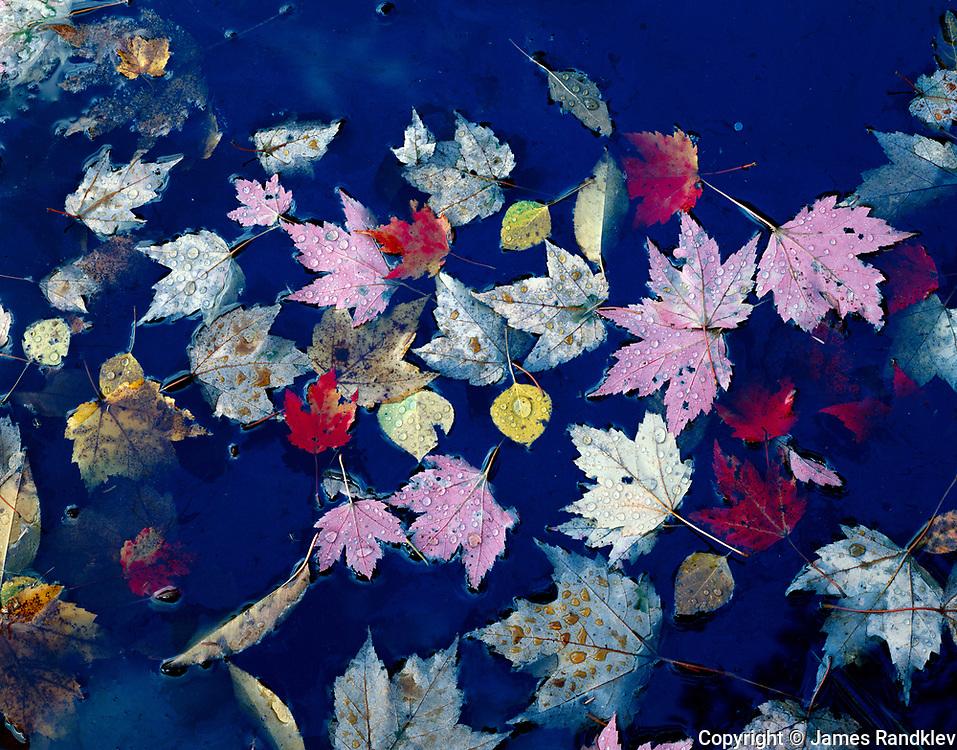 Pool of autumn leaves.