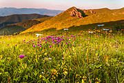 Impresive mountain landscape with pink flowers at sunrise