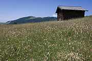 Alpine panorama of farming huts on the Siusi plateau, above the South Tyrolean town of Ortisei-Sankt Ulrich in the Dolomites, Italy.