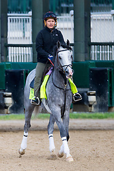 Derby 142 hopeful Cherry Wine with Faustino Aguilar up were on the track for training, Monday, May 02, 2016 at Churchill Downs in Louisville.