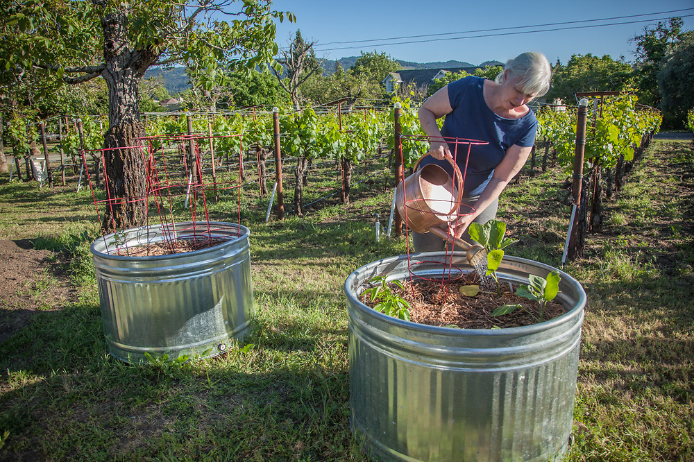 """Deborah Testa waters her new garden in Calistoga  """"We moved here last September...I always wanted a garden but our home in Los Angeles was on a vertical lot and just didn't work for a garden.  So, this is my first time as a gardener...I like my additional elbow room."""""""