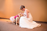 A photographer has captured the touching moment a bride was being aided by her service dog on her big day.<br /> <br /> The sweet snap taken by Maddie Peschong shows bride Valerie Parrott last Saturday before the wedding ceremony as she kneels in her dress while her dog Bella, donning a tutu, places her head against her.<br /> The trained medical alert and psychiatric dog is seen alerting Parrot, 25, that her heart rate was elevated and was trying to calm her down by performing a grounding task<br /> <br /> 'Basically, it helps me to take a moment away from what ever is causing the anxiety and keep me from having a panic attack,<br /> <br /> 'When she does this, she will do things like lick my hands or lean and put her weight on me and generally gets me to focus on her instead of my surrounding. Also, she was being pretty darn cute.' <br /> Parrott, who married her husband Andrew at a church in Sioux Falls, South Dakota, was matched with the three-and-a-half-year-old yellow Labrador in October 2013 and the dog has been by her side ever since.<br /> Bella helps Parrott with panic attacks, migraines, high blood pressure and anxiety, according to Mashable.<br /> <br /> the service dog also helps with side effects from medication such as passing out, and also with response tasks such as getting help, getting Parrot to a safe place and sitting or lying down.<br /> <br /> During the couple's wedding at Rustic Hills Community Church, Bella was not the only dog in attendance as the couple's dog, Henry, was at the ceremony.<br /> 'One of my biggest goals since being paired with Bella has been to positively impact the service dog community by spreading awareness and helping educate others. This photo not only helps give me a plat form to do that, but it also shows the amazing bond that is formed between service dog and handler,'<br /> <br /> 'I just really hope it continues to help educate and show the love service dog teams have for one another dog and human.' <br /> ©Exclusivepix Media