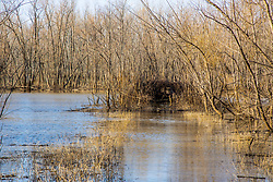 Landscape of water and trees in late winter at Sanganois State Fish and Wildlife Area