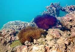 Brilliantly coloured anemones, sponges and corals line the edge of Turtle Reef, in Talbot Bay on the Kimberley coast.