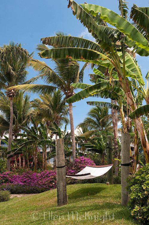 Hammock beneath palm trees in Providenciales, Turks & Caicos