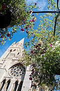 Truro Cathedral in bloom