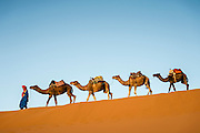 sand dunes, Morocco, camels, desert, Sahara