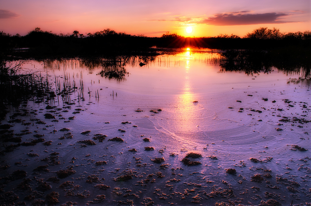 An amazing sunset in a salt marsh in Estero, Florida. This shallow water was hot from the sun, and the mud could devour your shoes, but the reflection was gorgeous!