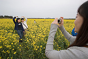 Jeju Island. Tourists taking souvenir photos in a rape field in full bloom.