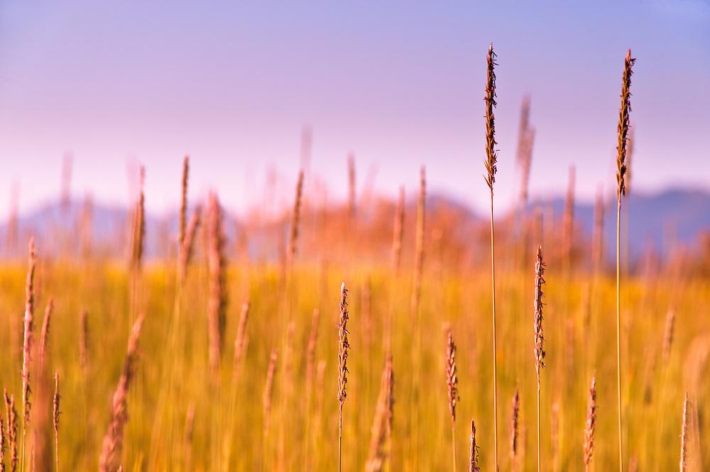 Hay field in Bigfork, Montana