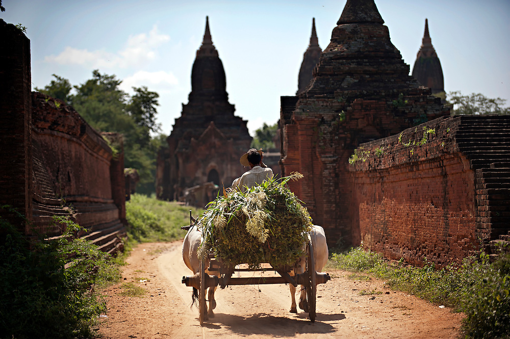A farmer transporting his crop through the ancient stupas and temples at Bagan, Myanmar.
