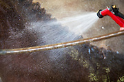 Afspoelen<br /> Veiling Dutch Sport Horse Sale 2013<br /> © DigiShots