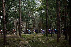 The peloton speed through the woods at Boels Ladies Tour 2019 - Stage 3, a 156.8 km road race starting and finishing in Nijverdal, Netherlands on September 6, 2019. Photo by Sean Robinson/velofocus.com