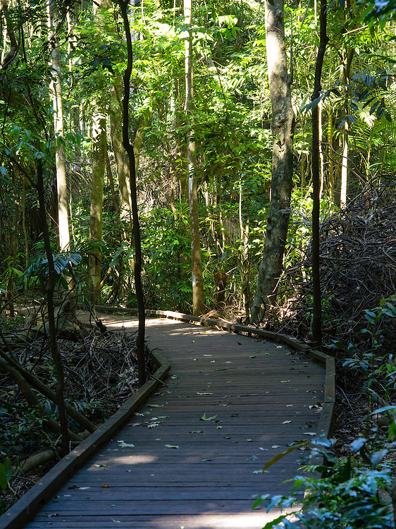 Boardwalk through the Victoria Park Nature Reserve, New South Wales, Australia.