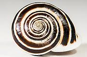Fibonnaci Snail, Austin, Texas, August 3, 2015.