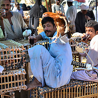 Man Holding Chicken Drinking Black Tea at Market in Luxor, Egypt<br />