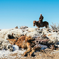 Mongolia. Uvs province, 2016.<br /> <br /> A beneficiary riding his horse next to his dead animals in Uvs province, Mongolia.