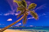 Palm tree on the beach at Tokoriki Island Resort, Fiji Islands
