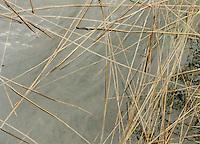 Reeds floating on lake