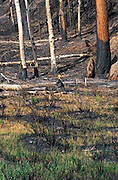 Hayman Fire, Colorado