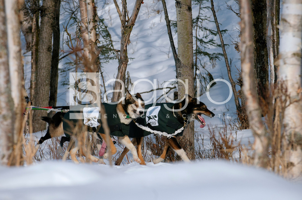 A dog team trots along the Chester Creek Trail during the 2011 Ceremonial Start.