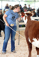 Sarah Osborne, a DelVal freshman, competes with Juliette in the livestock competition during A Day at Del Val University Saturday April 23, 2016 in Doylestown, Pennsylvania. (Photo by William Thomas Cain)