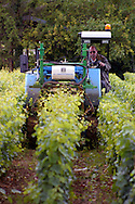 Tractor trimming vines, Beaune France.