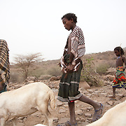 Asia and her brothers Hammed,Kamil and Ibrahim tend to their heard of goats. They live with their family in a small compound in the countryside outside Delafagi town.  Action for Integrated Sustainable Development Association (AISDA) work in the AFAR region of Eastern Ethiopia, based in Delafagi. The Afars practise an old tradition of Female Genital Mutilation where the baby girls has her clitoris and labia cut away and her vagina sewn up. The day before her wedding day the girl is un-stiched ready for marriage. Its a brutal and barbaric tradition which AISDA is challenging with great effect, now more than a hundred girls in Dowe district have been saved from the knife and AISDA is now rolling out the scheme in Delafagi. Delafagi is where the oldest ever human remains have been found, the found is thought to be 4.5 mill years old.