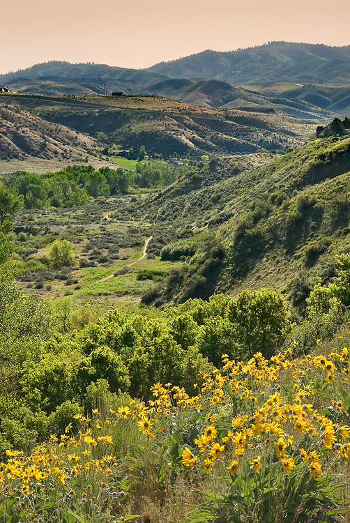 Idaho. Boise. Arrowleaf Balsamroot yellow flowers with the Cottonwood Valley and foothills beyond.