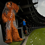 Brandon Selph playing the role of Chewbacca poses for a photograph at Topgolf Monday, July 20, 2015 in Brandon. CHRIS URSO/STAFF