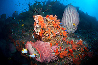Soft Corals, Barrel Sponges, and reef fishes<br /> <br /> shot in Indonesia