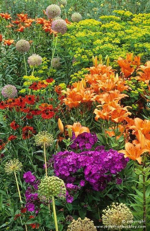 Lilium 'Fire King' with Helenium 'Moerheim Beauty', phlox and alliums in the Oast garden