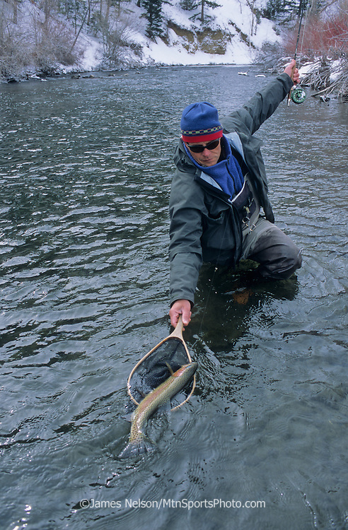 08243-S. A fly fisherman nets a large rainbow trout during a winter day on the Big Lost River, Idaho.