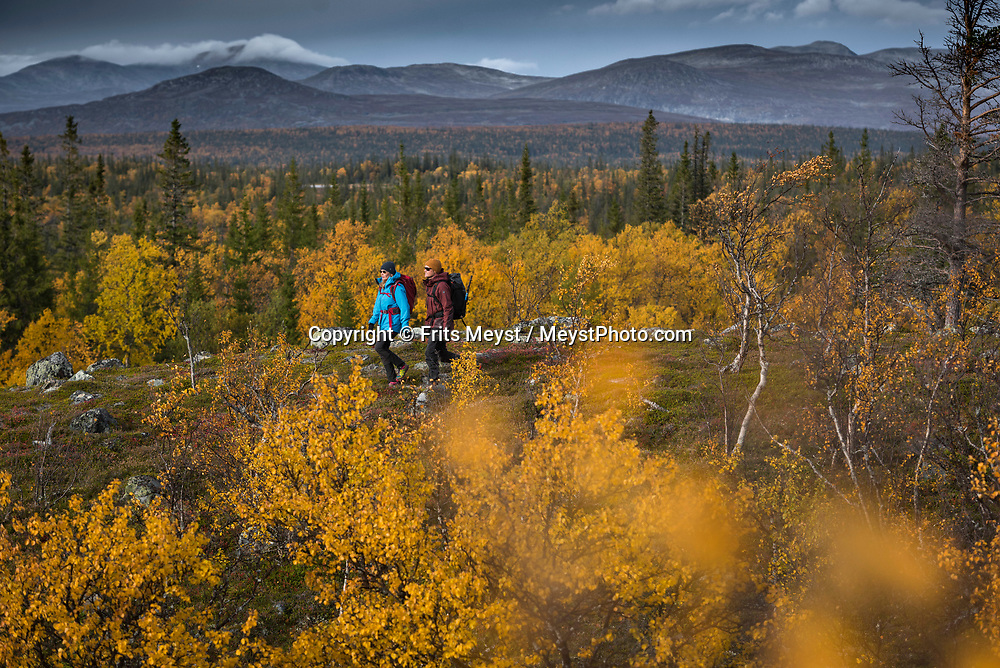 Jämtland Härjedalen, Sweden, September 2018. We hike through the forests of Vålådalen past ancient Sami settlements and fells up to the Lunndörrsstugan mountain hut. Jamtland has a unique flora and fauna and is famous for its accessible wilderness and superb food. An ideal place for hiking, fishing and biking, as well as canoeing, wild game watching and horse-riding. Photo by Frits Meyst / MeystPhoto.com