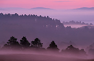 Scots pine forest before mid-summer dawn, Abernethy, Scotland