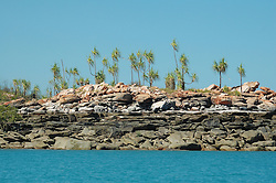 Pandanus spiralus waves in the wind on Wailgwin Island on the Kimberley coast.