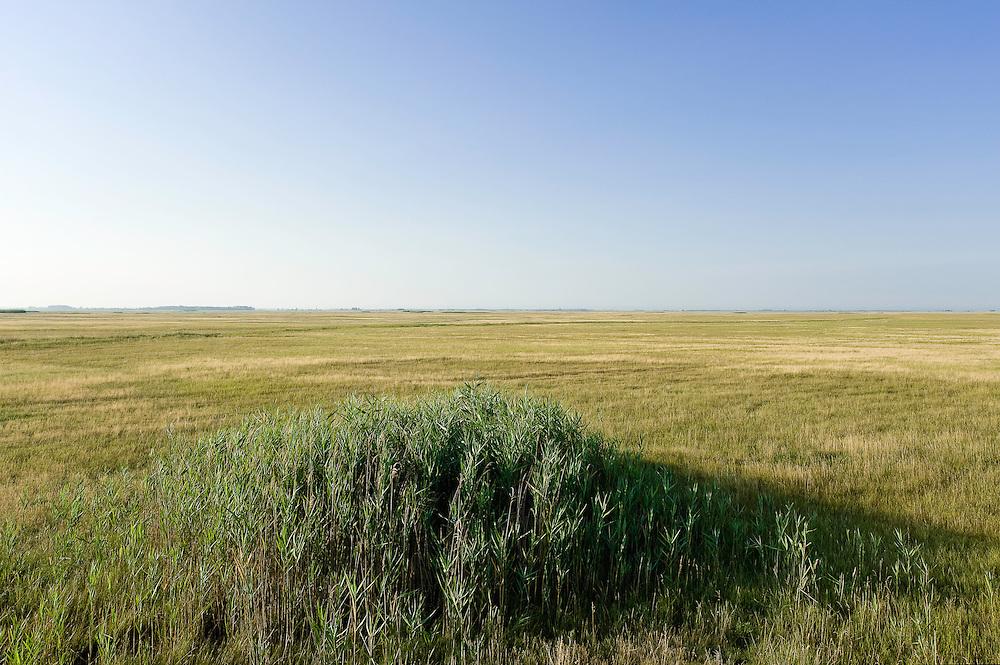 Typical neverending Hortobagy landscape, Hortobagy National Park, Hungary