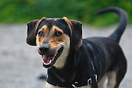 Harley is a happy and friendly dog from the Chemung County SPCA.