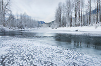 Ice and frost along the Birkenhead river near Pemberton, Coast Mountains British Columbia