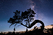 The Milky Way galaxy rises behind a bent white bark pine tree at Lake Aloha in the Desolation wilderness hike in south lake tahoe.