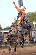 Tim Murlow of Brown City, MI rides in the first round of the Excalibur Rodeo bull riding competitiion at the 2009 Emmet/Charlevoix County Fair.