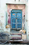 dogs asleep on doorstep, Jaipur, India