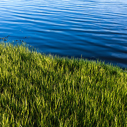 Salt marsh grasses on the banks of the Oyster River at Emery Farm in Durham, New Hampshire.